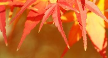 jesenné pobyty (6).png